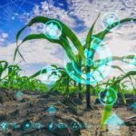 datos,cultivo, crecimiento, biotecnología